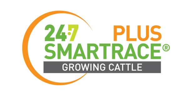 SMARTRACE PLUS GROWING CATTLE